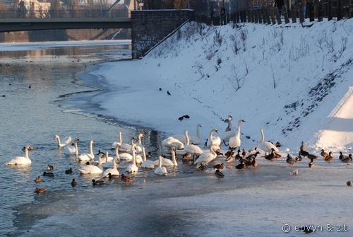 ptactwo zimą