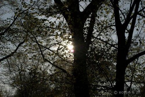 światło i cień